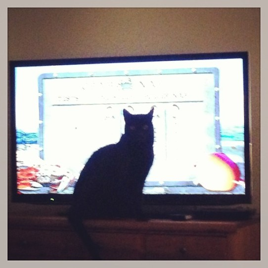 Blossom the cat in front of TV