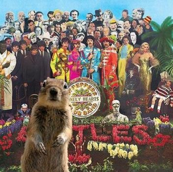 Sgt Pepper Squirrel photobomb